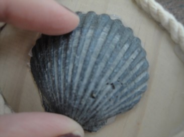 scallop shell ornament (3)